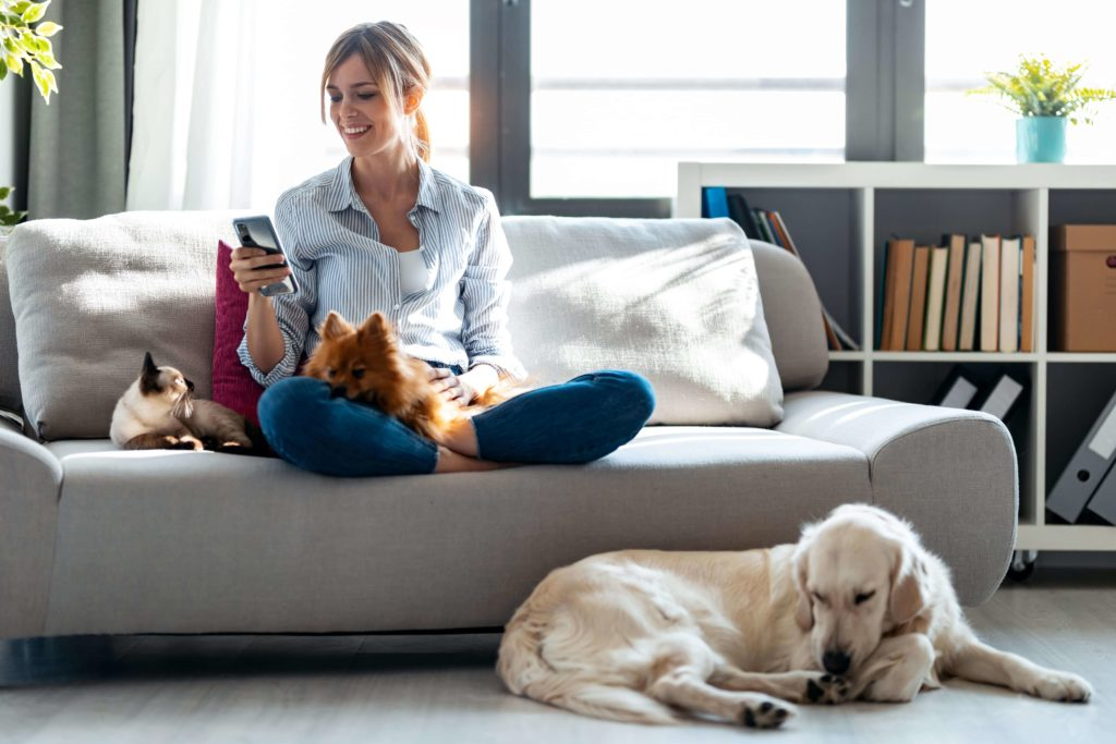 HeartlandPetHosptial_blog_Pet_insurance