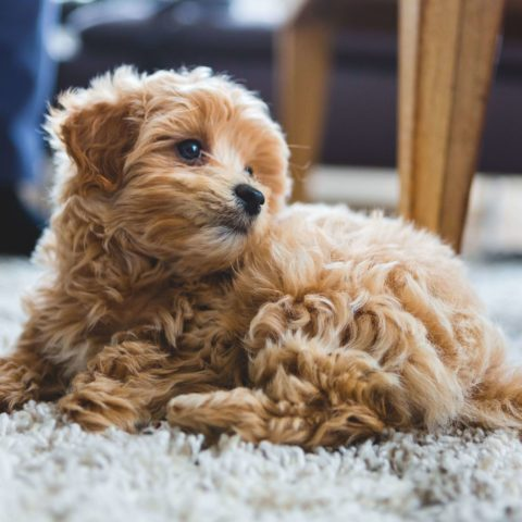 HeartlandPetHosptial_blog_house_training_puppies